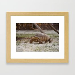 Big turtle Framed Art Print