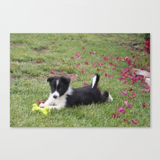 Border Collie Canvas Print