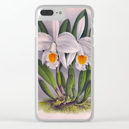 Vintage White Orchids Cattleya Virginalis Lindenia Collection Clear iPhone Case