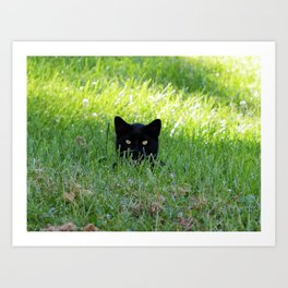 Panther in the Grass Art Print