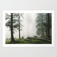 - Mist And The Pines - Art Print