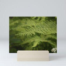 Jane's Garden - Fern Fronds Mini Art Print