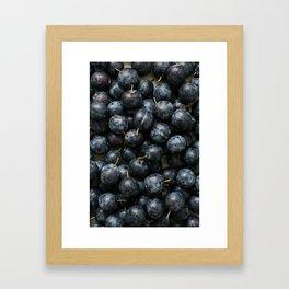 Damson Plums Framed Art Print