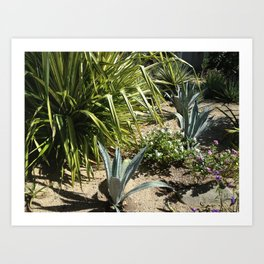 Cooper Island, Brittish Virgin Islands, Tropical Plants Art Print