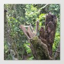 A cyclone damaged tree in the rain forest by hereswendy