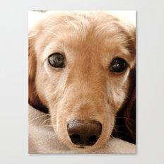 Puppy-Dog Eyes Canvas Print