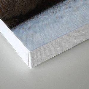 The Kitty Canvas Print