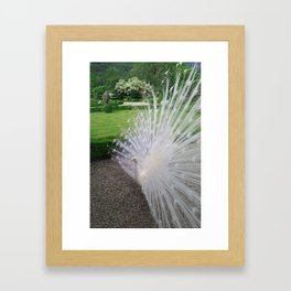Magnificent White Peacock of Isola Bella Framed Art Print