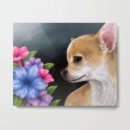 Dog 77 Chihuahua Dog Metal Print