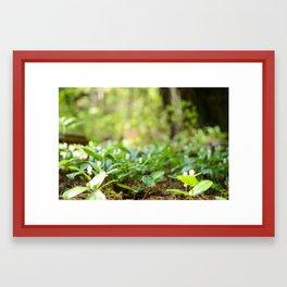 Spring Shoots Framed Art Print