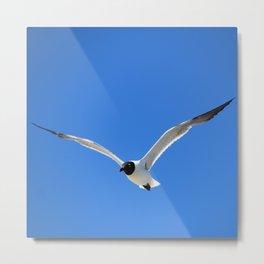 Ocracoke Seagull 2 Metal Print