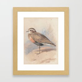 Archibald Thorburn (1860-1935) A Ruff; with another wading bird Framed Art Print