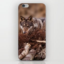 Grey Wolf iPhone Skin