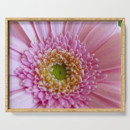 Pink Gerbera Flower in Detail with Yellow Bits Serving Tray