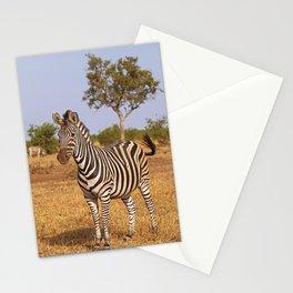Zebra - Africa wildlife Stationery Cards