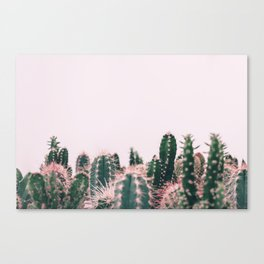 Pink Blush Cactus Canvas Print