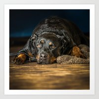 rottweiler Art Prints featuring Rottweiler resting by lifeandthat photography
