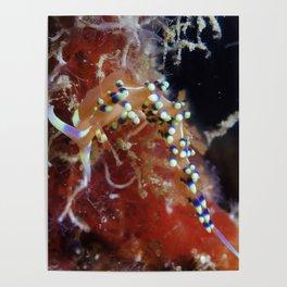 Arborek Nudibranch Poster