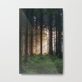 Winter Sunbeams Metal Print
