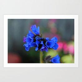 Bonny Blue Art Print
