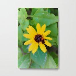 Flower Bug Metal Print