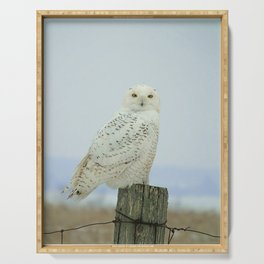 Snowy Owl Serving Tray
