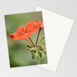 Scarlet Pelargonium Stationery Cards