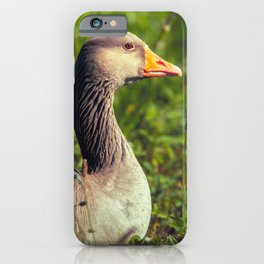 Greylag Goose iPhone Case