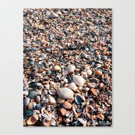 Beach Texture - Seashells Canvas Print