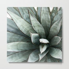 Botanical Succulents // Dusty Blue Green Desert Cactus High Quality Photograph Metal Print