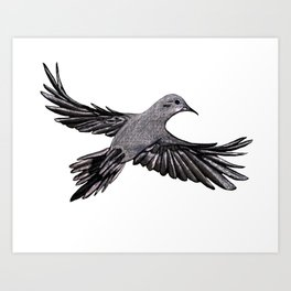 Morning Mourning Dove Art Print