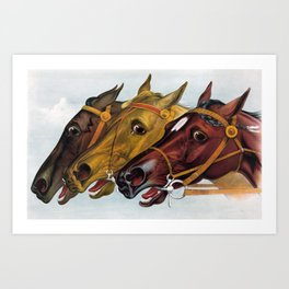 Horse head portraits Art Print