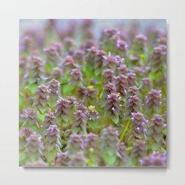 Watercolor Flower, Purple Dead Nettle 02, Vienna, Virginia, Delicately Stacked Metal Print