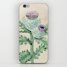 Downy thistle iPhone Skin