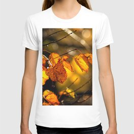 Linden tree leaves in autumn T-shirt