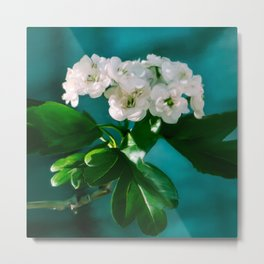 Fruit Tree Blossoms Metal Print
