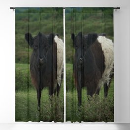 Belted Galloway Cow Blackout Curtain