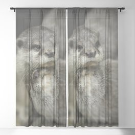 Otter Cuddle Sheer Curtain