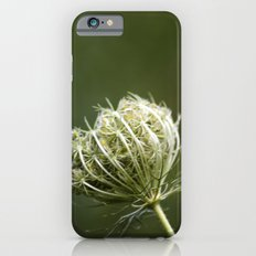 Closed Queen Anne's Lace iPhone 6s Slim Case