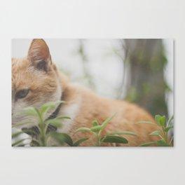 Half a Cat Canvas Print