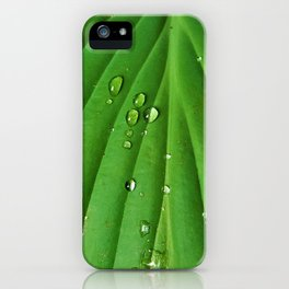 After Spring Rain - Water Droplets on a Leaf iPhone Case
