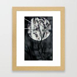 kangaroo paw / sundown Framed Art Print