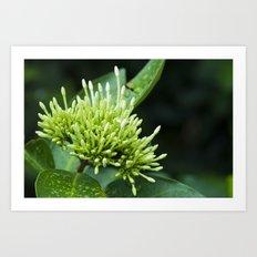 Tiny Young Flora Explosion Art Print