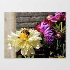 Close-up of a Busy Bee on a Butter White Flower Canvas Print
