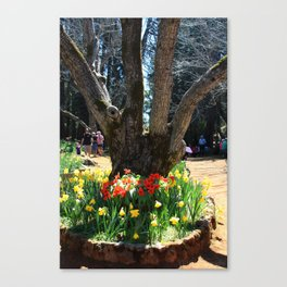 4 Trunks and Daffodils Canvas Print