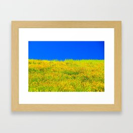 yellow poppy flower field with green leaf and clear blue sky Framed Art Print