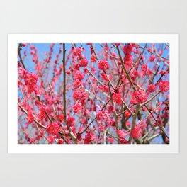 Japanese Spring #1 Art Print