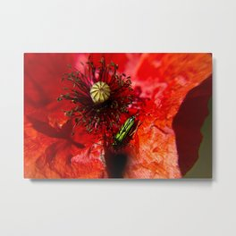 Little green insect while he's walking on a poppy Metal Print