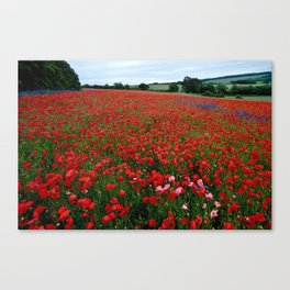Pink Poppies in a field of Red Canvas Print