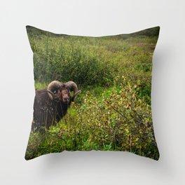 Male icelandic sheep Throw Pillow